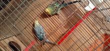 طيور 20