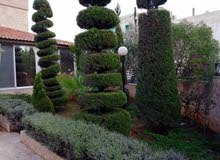 Al Bnayyat property for sale with 3 Bedrooms rooms