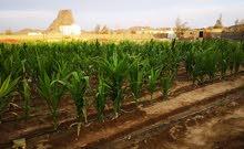 مزرعه في خميس مشيط وادي بني هشبل
