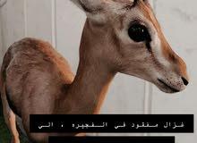 مفقود غزال
