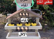سقاية الماء والاكل للطيور