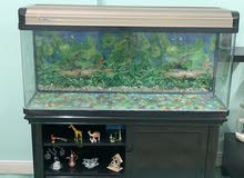 Fish Tank Very in good condition
