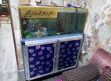 حوض كامل مع 3 اسماك للبيع
