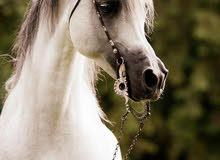 اعمل في مجال الزراعة بكل حاجاتها  بخبرة  واعمل في مزراع الخيول  ولابقار