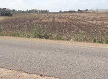ارض فلاحية قرب من مديونة جات على الطريق