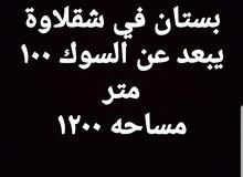 بستان في اربيل شقلاوه سياحي طابو صرف
