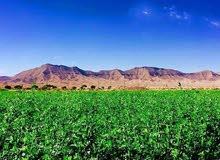 ارض زراعية المساحة 2 هكتار