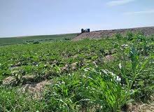 ارض زراعية قابلة للتجزئة للبيع بافضل سعر للفدان وبتسهيلات في السداد مقدمة من شركة الفردوس