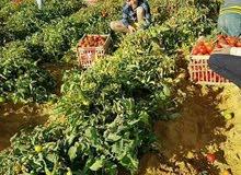 مزرعه 8فدان للبيع
