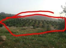 ارض للبيع  مطله على البحر الميت
