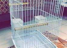 قفص للبغبغاء والطيور الكاسكو