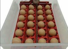 للبيع فقاسة بيض دجاج ، بط ، رومي ، فري مع كفاله