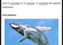 عين الحوت الازرق