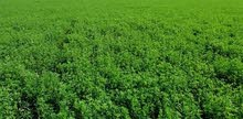 ارض زراعية مسجلة للبيع