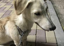 كلب ...