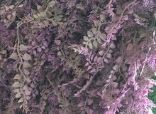 عشب جداري نوعيه ممتازه وأشكال مميزه