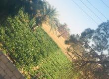 مزرعة للبيع في الشريط الاخضر