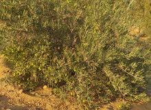 فرصه هائله  مزرعة للبيع في ريف  الفيوم مساحتها60 فدان مسجله شهر عقاري ولها مصدر
