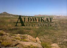 ارض للبيع في المفرق , مساحة الارض 40,000 م