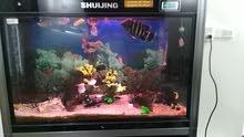 حوض سمك تصميم بحري مع طاوله خاصه وحوض اسفل الطاوله للفلتر مع اسماك