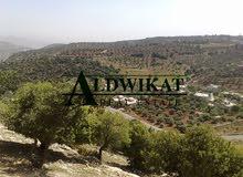 ارض للبيع في الهاشمية بالقرب من دابوق بمساحة 4750 متر