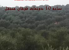 مــــــــــــــــزرعة زيتون للبيـــــــــــع