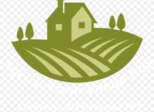 مطلوب ايجار مزرعة في ازكي او سمائل