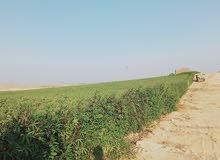 أرض للبيع 20 فدان في القاهرة