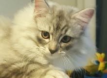 قطط جميلة جدا