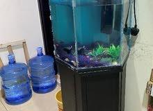 Fish Aquarium (Negotiable)