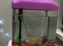 حوض سمك وسط الحجم