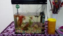 يوجد لدي حوض لسمك