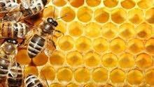عسل سدر اصلي من المناحل النحل مضمون ومفحوص