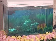 حوض أسماك للبيع نظيف جدا
