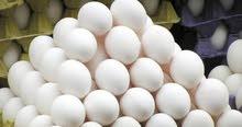 مطلوب  بيض دجاج الحم روس  الدجاج البيض الدوجن مخصب او ملقاح