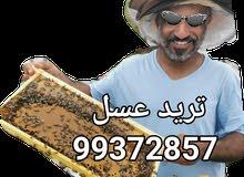 عسل برم الظاهرة