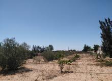 قطعة ارض للبيع الموقع صرمان المساحة 3000 مترمربع القطعة مسيجة بالكامل ويوجد بها