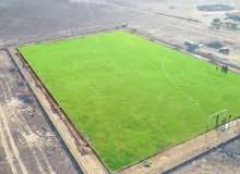 تعشيب الملاعب بالمسطحات الخضراء بالاقساط