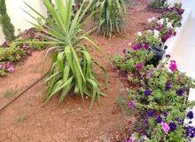 شقة شبه ارضية على مستوى الشارع مع حديقة واسعة للبيع بالاقساط في شفا بدران مقابل الجامعة التطبيقية