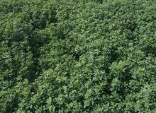 ارض زراعية بجوار مزرعه لمار تابعة لمحافظة الإسكندرية للبيع للجاديين فقط