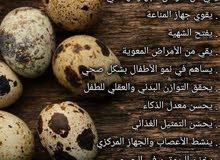 بيض طائر السلوى