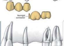 اخصائيه أسنان مصريه مصنفة نائب طب أسنان عام