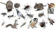 شركة تنظيف بالرياض فلل شقق ومكافحة الحشرات بالرياض