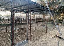 من لديه الرغبة في استئجار مكان لتربية الطيور بط - دواجن - حمام - 24,000 درهم
