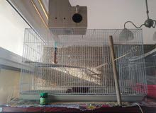 huge bird cage with acceories . breeding box