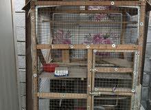 قفص خانتين يصلح لجميع الطيور المشبك قوي للبيع او مراوس حسب القناعة طيور فقط مراوس