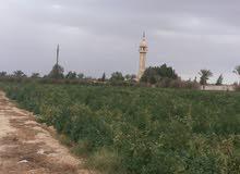 مزرعه ع طريق الصحراوي  15فدان