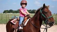 خيول للايجار