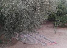 1250 متر شرق دير البلح