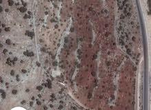 مزرعة بالأردن تتكون من ست دنومات